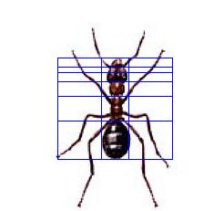 s-ant