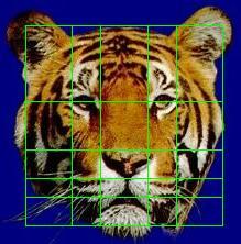 s-tiger
